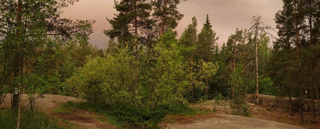 Aamu sarastaa Keskuspuistossa, Pirkkolan kalliolla