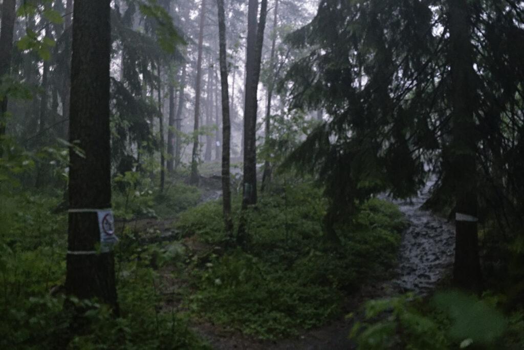 Sade kastelee Pirkkolan vanhaa metsää