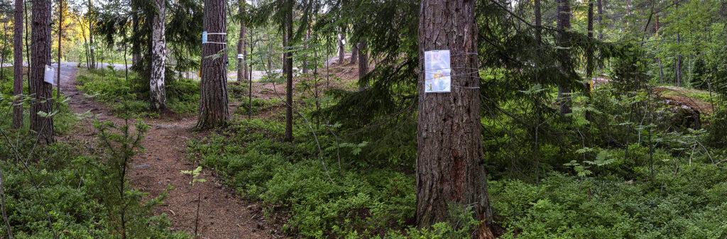 Pirkkolan monitoimihallin uhkaama metsäalue