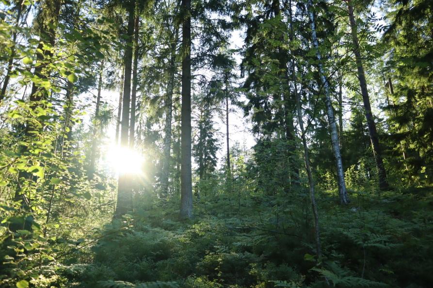 Suomen luonnon päivä 29.8.2020