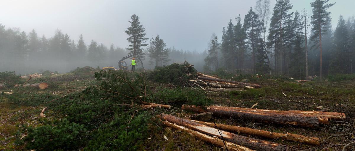 Halliyhtiö kaatoi Pirkkola metsän oikeusprosessin ollessa vielä kesken (kuva Sanni Seppo)